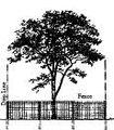 Tree fencing2